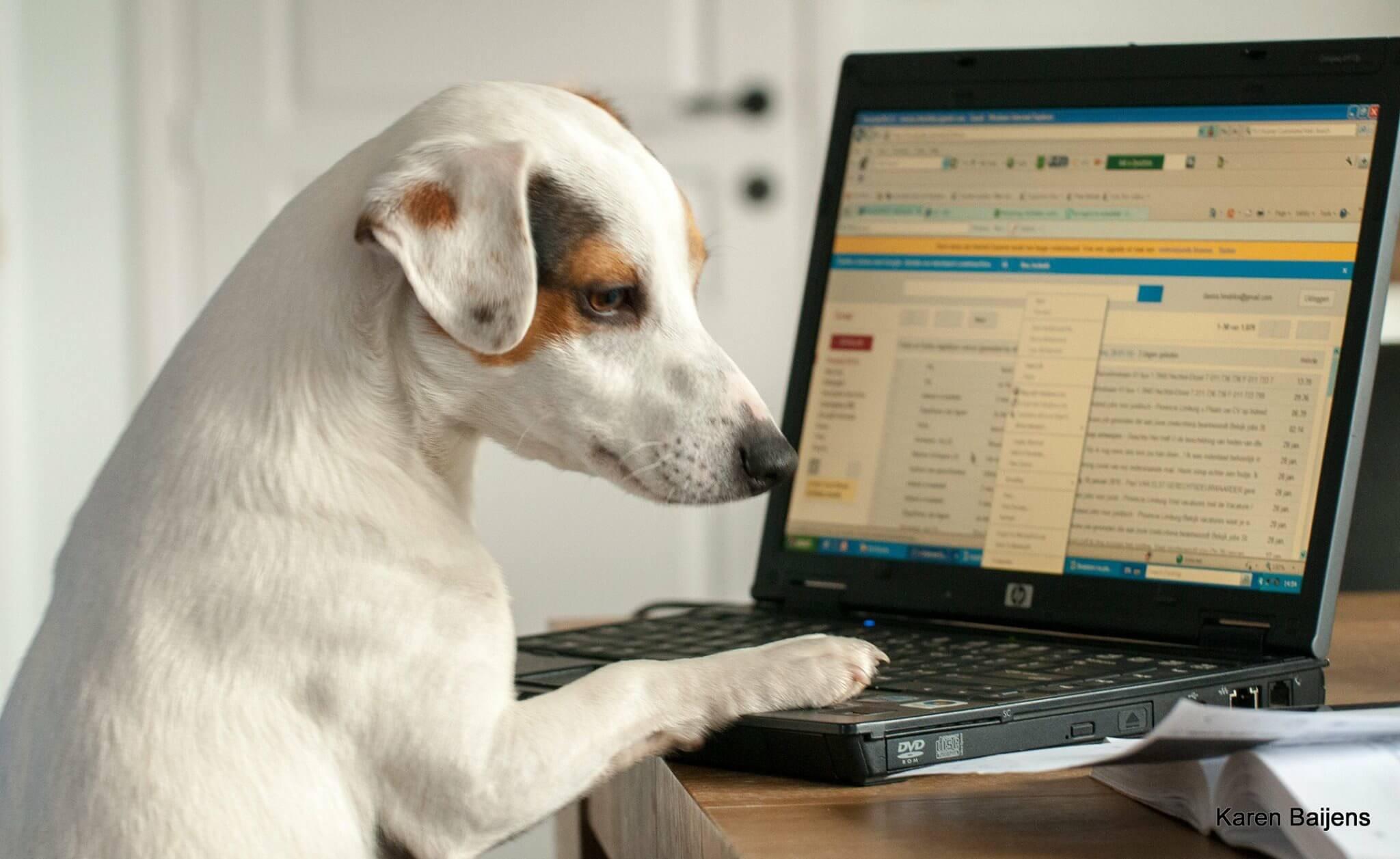 Hondje achter de computer